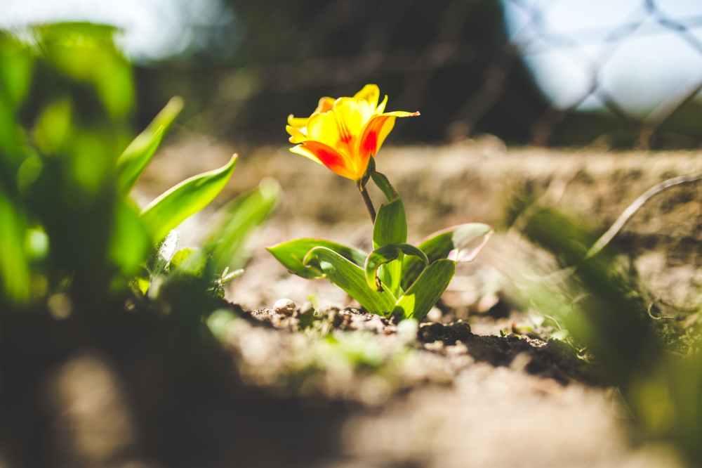 yellow-spring-flower-closeup-6447.jpg